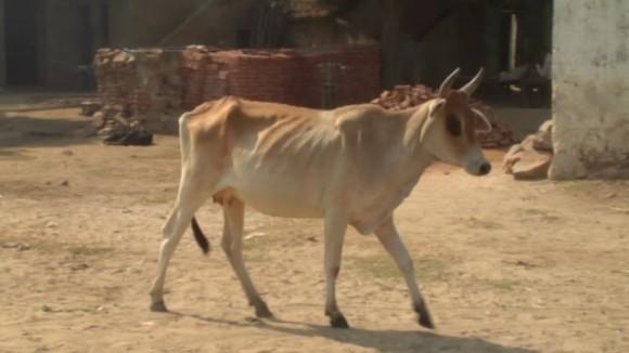 India reel